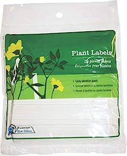Gardener's 蓝丝带 T022B T022B-IPO T006B 结实伸缩系带草植物