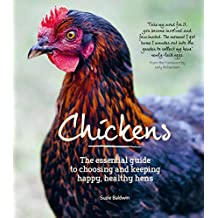 Chickens (English Edition)