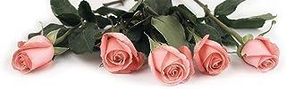 优质纸张! Blush Roses Letterhead,80 只,21.59x27.94 厘米(2014334) Pink Rose Petals 80 Sheets