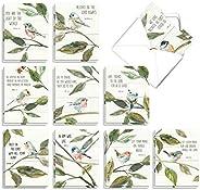 The Best Card Company - 20 个批量问候记录卡套装空白(10 x 13 厘米)(10 种设计,每个2 个) - 经文鸟 AM7108OCB-B2x10