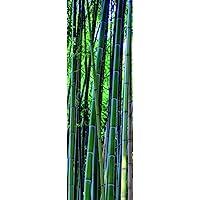 Plage 162263 贴纸适用于厨房冰箱竹森林乙烯基 180 x 0.1 x 59.5 厘米,多色