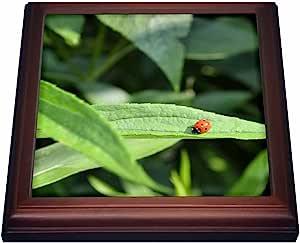 WhiteOak Photography Nature Scenes - Ladybug photo - Trivets 棕色 8 到 8 英寸
