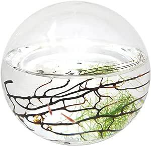 """EcoSphere 封闭水生生态系统,球体 4"""" diameter Small Sphere"""
