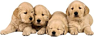 Paper House Productions 4 x 1.5 英寸(约 10.2 x 3.8 厘米)模切金毛猎犬小狗形状磁铁,适用于冰箱和储物柜