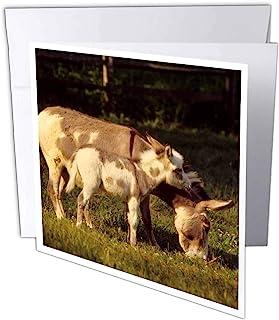 Danita Delimont - 驴 - NJ,几内亚空心路,萨丁尼 donkeys - US31 AJN0004 - Alison Jones - 贺卡 Individual Greeting Card