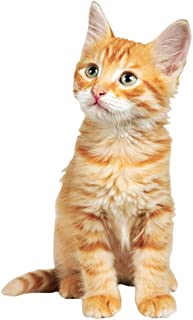 Paper House Productions M-0502E 模切冰箱磁贴,橙色小猫(6 件装)