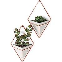 Umbra Trigg 悬挂式植物花瓶 几何形状,墙装饰-用于多肉植物,迷你仙人掌,人造植物等,小型,混凝土/铜制