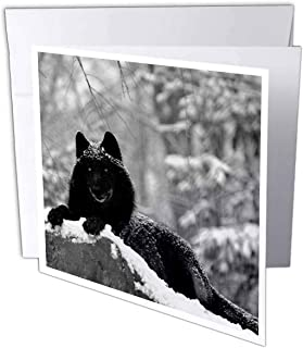 3dRose 8 x 8 x 0.25 Inches Rocky Mountain Wolf, Black White Greeting Cards, Set of 12 (gc_100280_2)