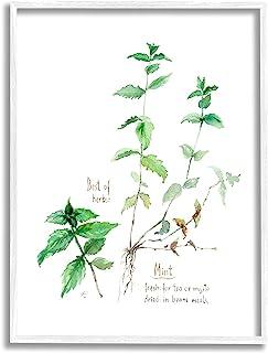 Stupell Industries Mint Sprigs Best of Herbs 花园植物,由 Verbrugge 水彩白色框架墙艺术,40.64 x 50.84 厘米,*