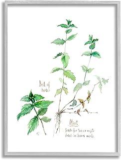 Stupell Industries Mint Sprigs Best of Herbs 花园植物,由 Verbrugge 水彩灰色带框墙艺术,27.94 x 35.56 厘米,*
