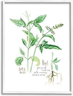 Stupell Industries 罗勒植物*好的*花园*,由 Verbrugge 水彩白色框架墙艺术,11 x 14