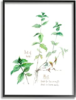 Stupell Industries Mint Sprigs Best of Herbs 花园植物,由 Verbrugge 水彩黑色框架墙艺术,40.64 x 50.84 厘米,*