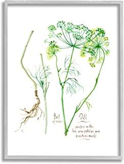 Stupell Industries Dill Greens Best of Herbs 花园植物,由 Verbrugge 水彩灰色框架墙艺术,11 x 14