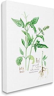 Stupell Industries 罗勒植物*好的*花园*,由 Verbrugge 水彩帆布墙壁艺术设计,24 x 30