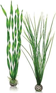 biOrb Easy 植物包,大号