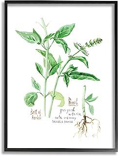 Stupell Industries 罗勒植物*花园*,由 Verbrugge 水彩黑色框架墙艺术,24 x 30