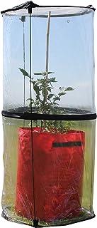 Tierra Garden Haxnicks Cloche010101 钟形,透明,50 x 50 x 110厘米