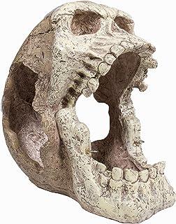 Penn-Plax Reptology Skull Hide-Away - 非常适合中小型爬行动物。