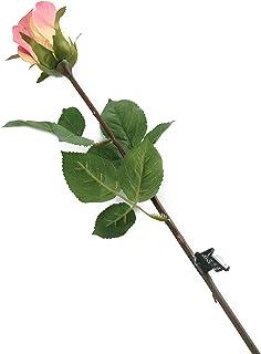 花朵优雅_p1 Dozen 粉红色 12F062PL