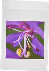 danita delimont–花–fierweed , evening primrose 花朵–na01fzu0009–Frank zurey–旗帜 12 x 18 inch Garden Flag