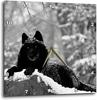 3dRose Rocky Mountain Wolf, Black White - Wall Clock, 13 by 13-Inch (dpp_100280_2)