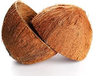 两个椰子壳半