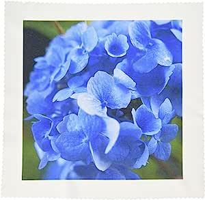 danita delimont–花–massachusetts 蓝色 mophead 绣球花–美国22码 jen0065–JIM engelbrecht–方块拼布