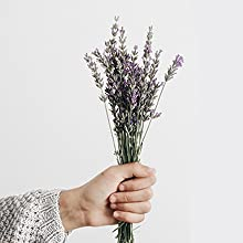 Woman's hand holding Lavender