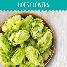 Image of hops flower in bowl, when combined with valerian root they have various benefits