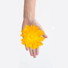 Woman's Hand Holding a Calendula Flower