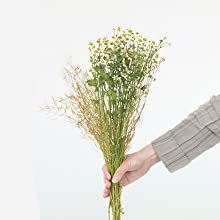 Woman's hand holding Chamomile